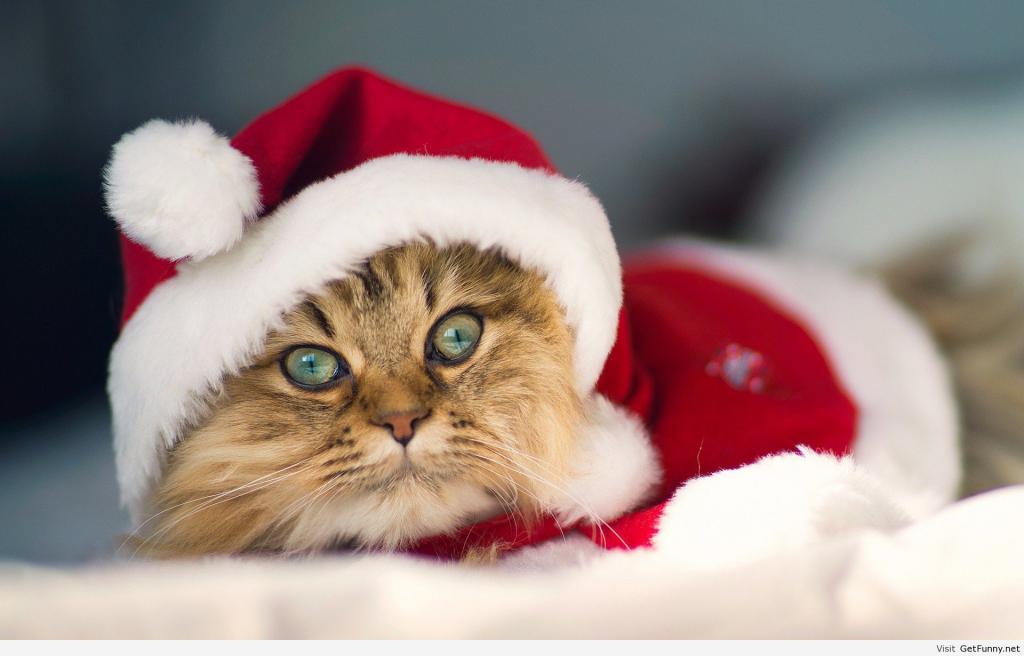 Koty - też mówią ludzkim głosem
