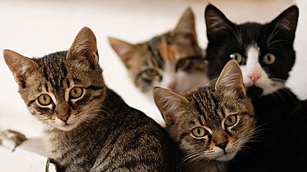 Koty – bądźmy ludźmi dla zwierząt